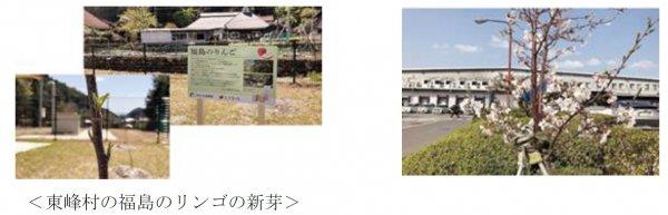 ringo+sakura.jpg