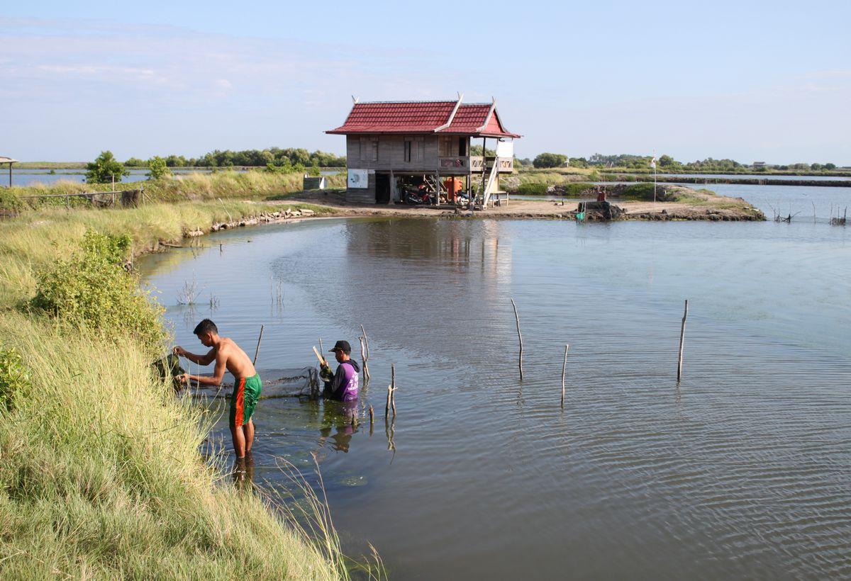 Sulawesi Island Shrimp Farming Improvement Project