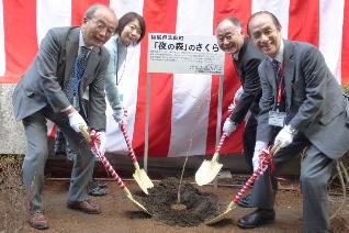 Yonomori Cherry Blossom Project